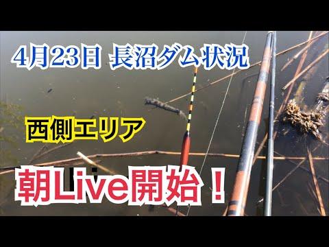 4月23日長沼ダムへらぶな釣り状況朝Live