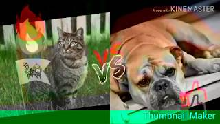Cat and Dogs photos from thumbal app . Edits by line master