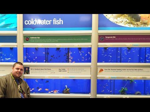 NEW COLD WATER FISH AT PETS AT HOME! 🐟 (PART 2)