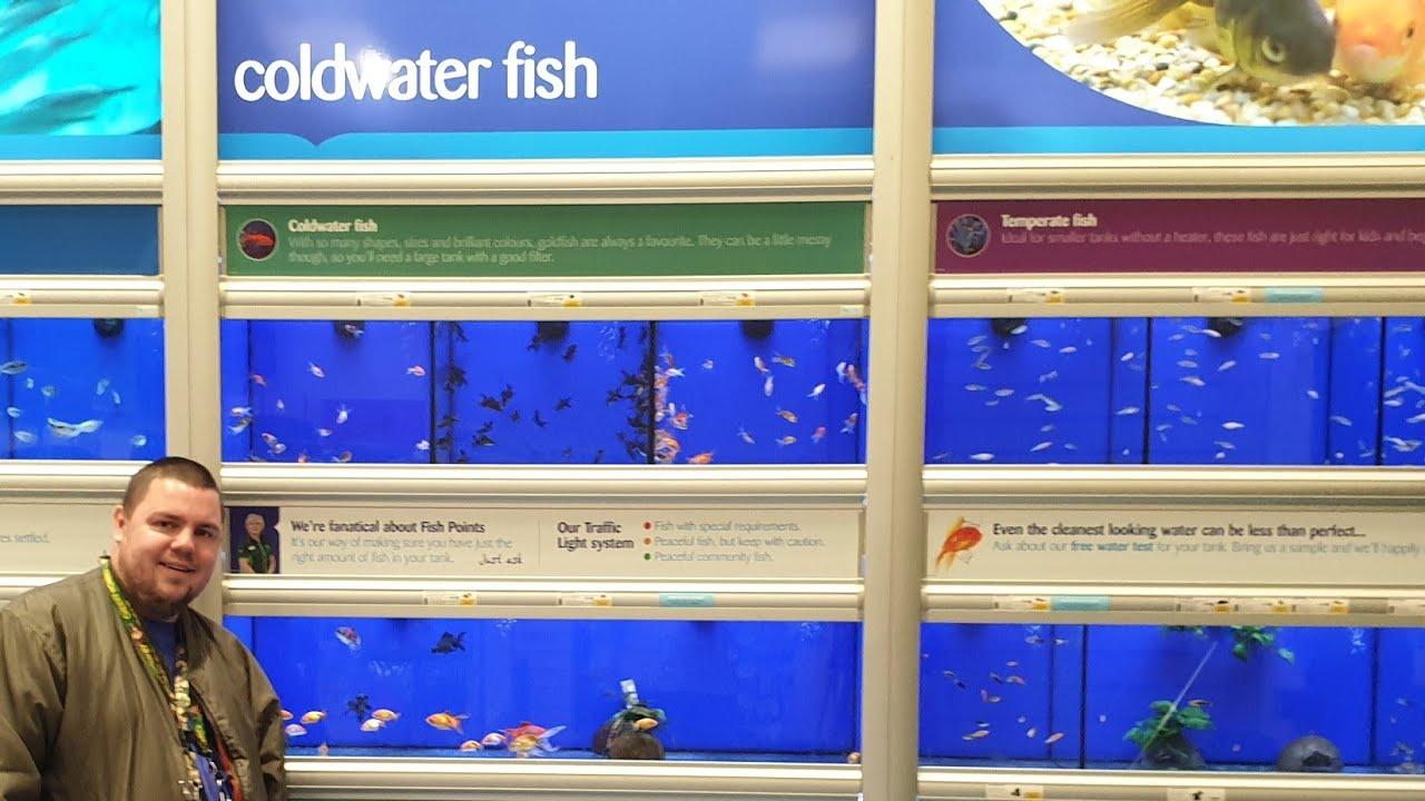 New Cold Water Fish At Pets At Home Part 2 Youtube