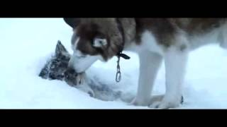 Sadest scene from Eight Below