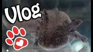 Ohnezahn nicht mehr allein? ♥ Neues für Youtube ♥ Aquariumpflege