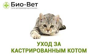 Уход за кастрированным котом. Ветеринарная клиника Био-Вет