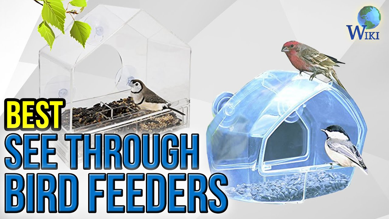 Awesome 7 Best See Through Bird Feeders 2017