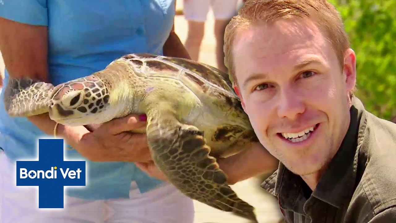 Saving Gorgeous Turtles in Queensland, Australia  | Full Episode | Wildlife of Tim Faulkner
