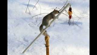Backyard Winter Olympics - The Squirrel Show