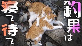 寝て待て小ニャコ ラとオイカワ釣り 釣果は寝て待て river fishing with a cat