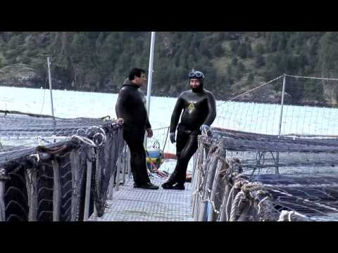 Aquaculture with copper alloy nets (Extended Version)