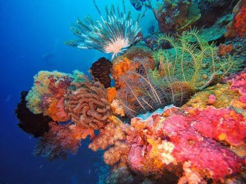 Dive Wakatobi with Divemate Indonesia - May 2017
