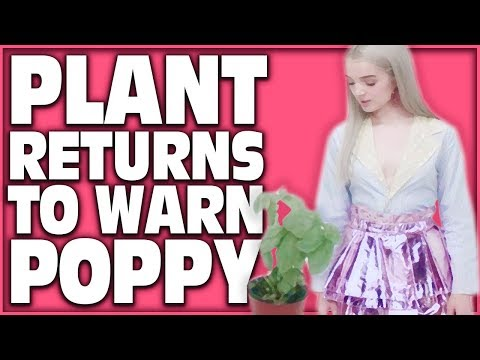 PLANT RETURNS TO WARN THAT POPPY /_\