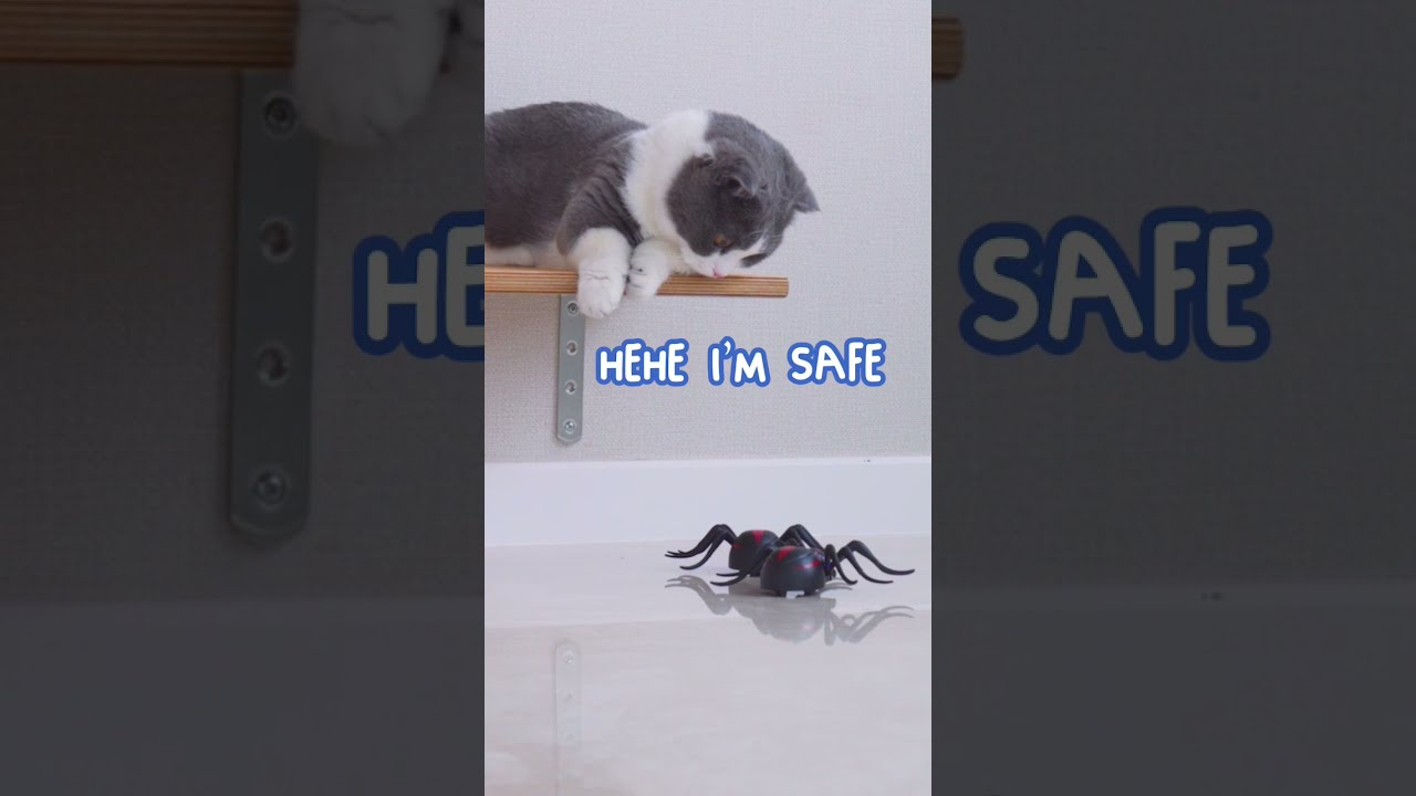 Cat Gets Pranked By Big Spiders