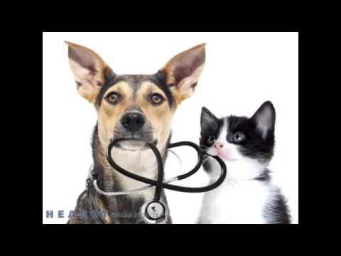 Briarcrest Veterinary Clinic - Spay and Neuter - Bryan TX 77802