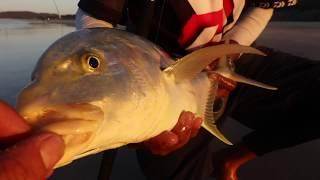 ASFN 2018 Fishing Vlog 0145 -  Expanding the species list Fraser Island Australia