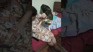 SALUKI dog(super sweet)