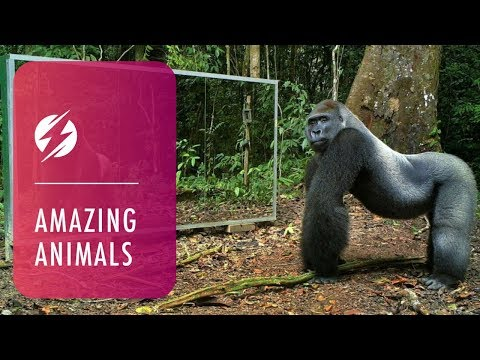 Thumbnail: Animals in Mirrors Hilarious Reactions
