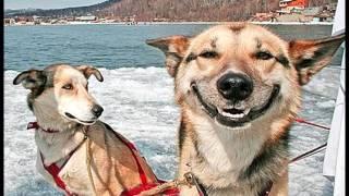 Животный смех
