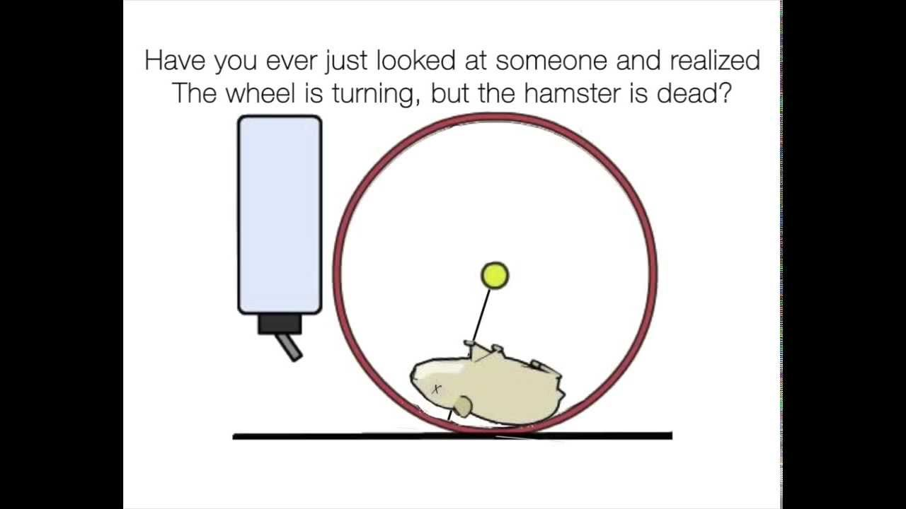 how to make a dog hamster wheel
