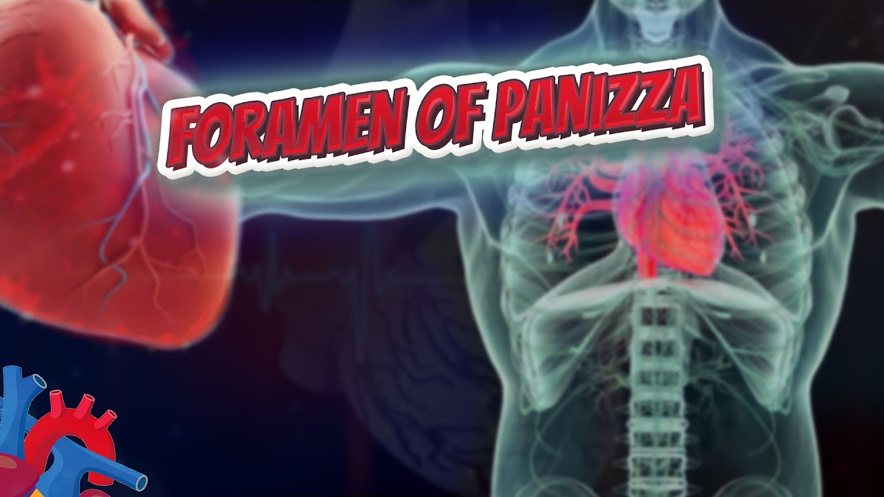 Download Foramen of Panizza - Human Heart ❤️ and Cardiology ❤️🔊✅