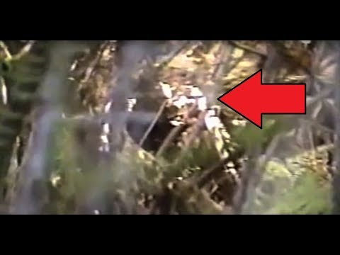 VERY IMPRESSIVE BIGFOOT FOOTAGE!! - Man Cries In FEAR While Video Taping 'REAL SASQUATCH' Sighting!!