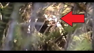 VERY IMPRESSIVE BIGFOOT FOOTAGE!! - Man Cries In FEAR While Video Taping Real Sasquatch Sighting