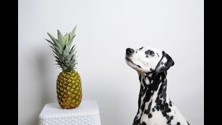 Why Pineapple Is Good For Your Dog!