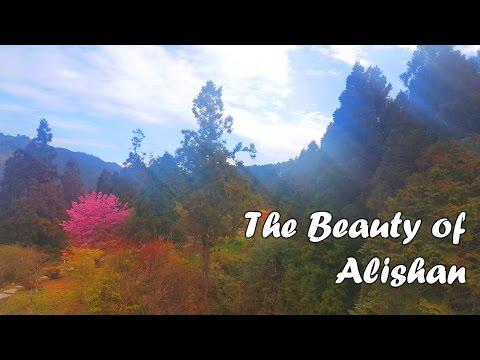 Alishan Trip