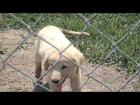 Cleveland - Bolivar County Animal Shelter - Cleveland, MS