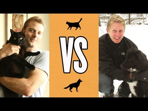 Cats & Dogs: Which Do You Prefur?