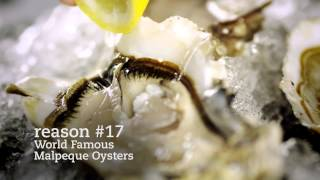 Reason #17 World Famous Malpeque Oysters