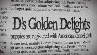 Maryland Golden Retriever Puppies (443) 250-7871 Md -- Youtube -- Google
