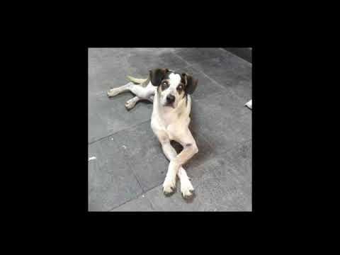 Cachorro Morto A Pauladas No Carrefour De Osasco Sp Youtube