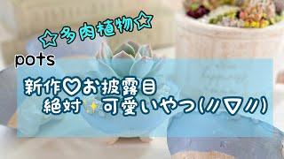 Gambar cover リラシアオリジナル 新作potsご紹介