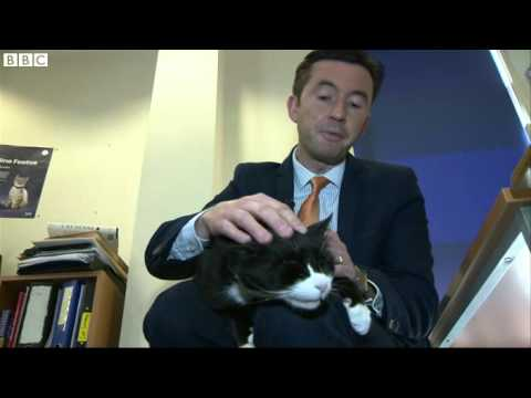 Palmerston the cat starts work as Foreign Office chief mouser   BBC News