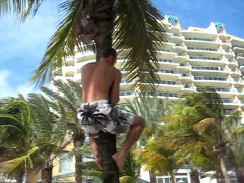 Coconut Tree Climbers in Miami Beach
