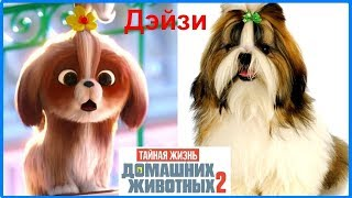 Новые Герои Тайная жизнь домашних животных 2 В РЕАЛЬНОЙ ЖИЗНИ The Secret Life Of Pets in real life
