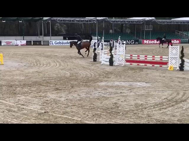 Stallion by Diamant de semilly X Phosphor xx B. 2014