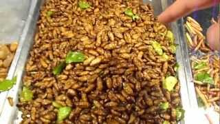 Night food market in Thailand selling edible bugs. Eating insects in Krabi Thailand. Bizarre foods!