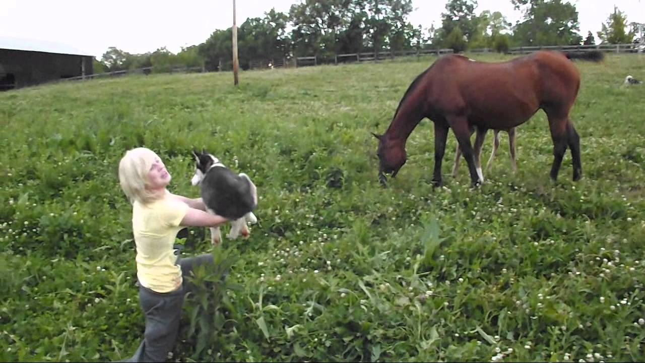 Hunting For The Wild Baby Horse Youtube