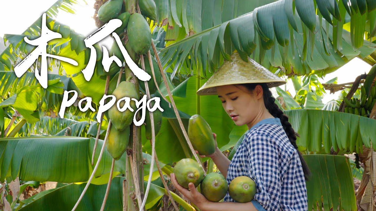 「一席一果」——生吃亦美味的木瓜【滇西小哥】