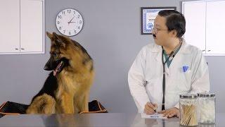 Hill's Prescription Diet Sensitivities Dog Food