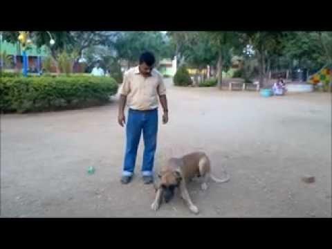 greden dog Training