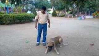 Greden Dog Training