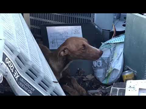 A Miracle! Dog Rescued After Trapped Under Debris Over A Month After Dorian