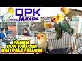 Panen Lovebird Dun Fallow Dan Pale Fallow Di Dpk Aviary Madura Mewah Mewah Sultan Akbar  Mp3 - Mp4 Download