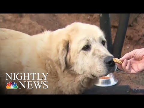 Christina Martinez - Dog Refuses To Abandon Home After Fire In Paradise