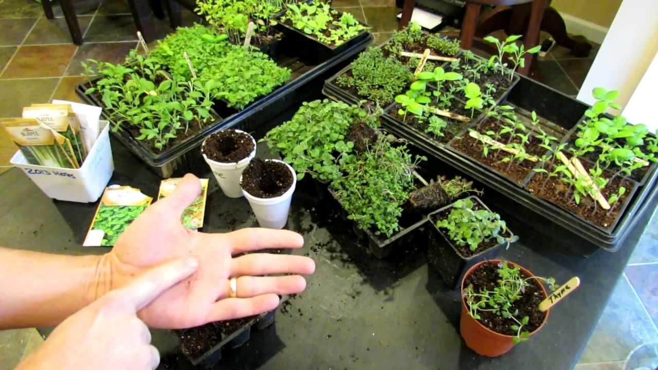 Planting Vegetables Pots Outdoors
