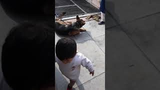 Funny video.aarsh playing  with dog(1)