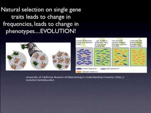 Genes, variation, and evolution