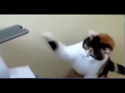 Funny Cat Videos - Funny Kittens - Funniest Animal Compilations - Funny Pranks - Cat Lovers YouTube