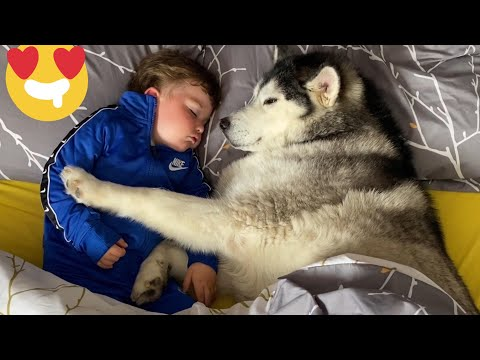 Husky & Baby Giggle Themselves To Sleep! [THE CUTEST VIDEO EVERR!!!!]